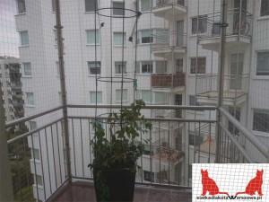 zabezpieczenie balkonu dla kota Warszawa Centrum
